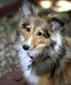Dog Walking Pet Sitting Rates Fairmount Pet Service