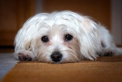 Dog Sitting Rates