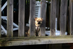 Dog Boarding Cost Philadelphia: How Much To Board A Dog?