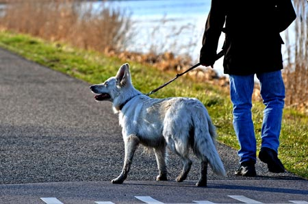 5 Dog Walking Dangers and Safety Tips