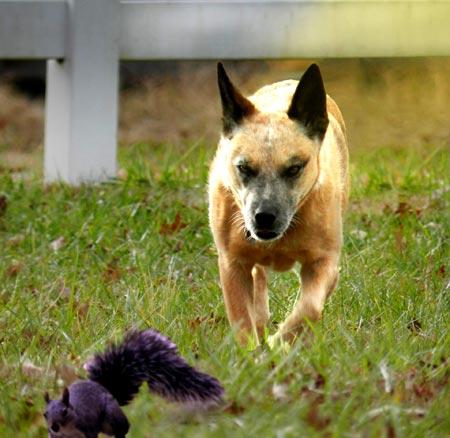 Dog walking safety tips: #5 wildlife