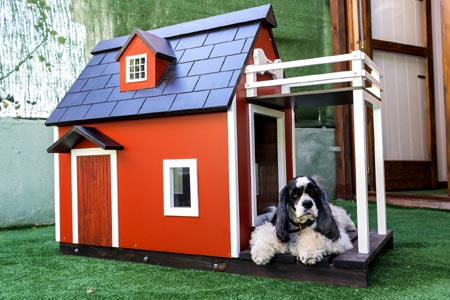 New dog owner tips: give your dog his own space