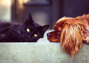 Pet Service Rates, Costs & Locations: Philadelphia, PA