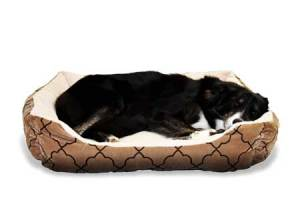 Bring a bed or blanket when boarding your dog