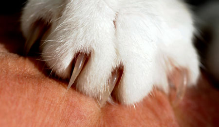 Those cat claws need trimming