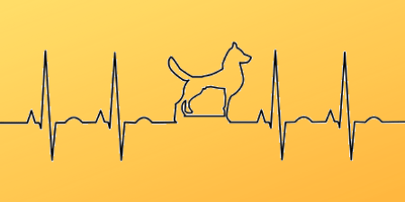 Notice dog health issues or medical emergencies