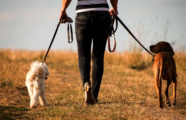 Pet Sitter And Dog Walker Job Description