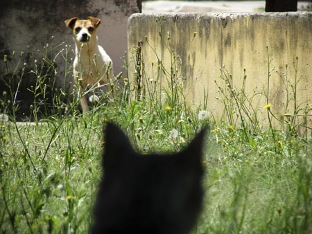 Best way to introduce a dog to a cat