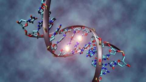 Chromosomes & Hormones, Biological sex - FairPlayForWomen.com
