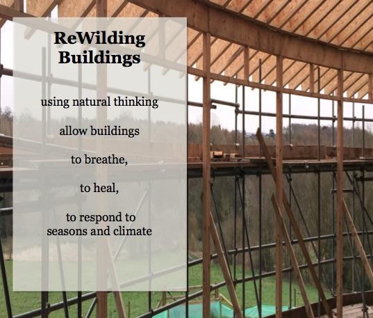 rewilding 2