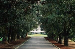 Augusta National magnolia lane 1