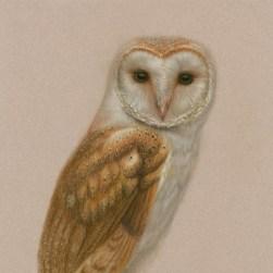 Barn Owl, original pastel framed.