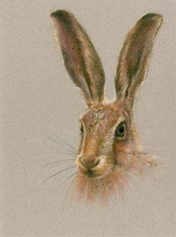 Hare, original pastel framed.