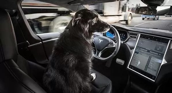 Tesla Love's the Dogs.