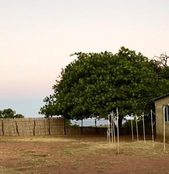 Thinkin Tree