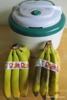 Bananas for dehydrating