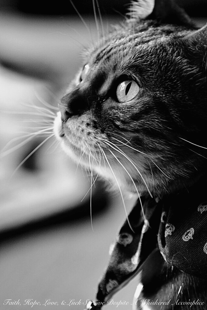 Brenna's Halloween Costume Torture 2013 & Halloween Pet Safety Tips | Faith, Hope, Love, and Luck Survive Despite a Whiskered Accomplice