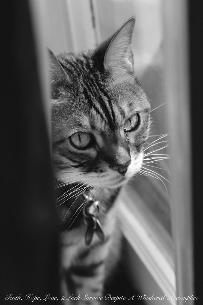 You Are Not Allowed to Complain About My Cat, Even If I Do | Faith, Hope, Love, and Luck Survive Despite a Whiskered Accomplice