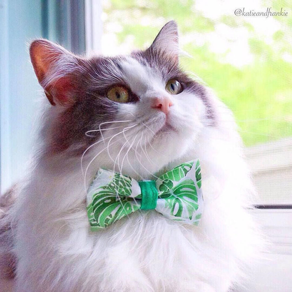 Palm Trees Bow Tie Cat Collar - Made by Cleo - Etsy