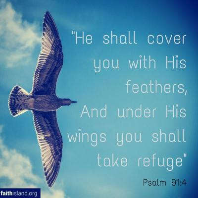 He shall cover you with His feathers - Psalm 91