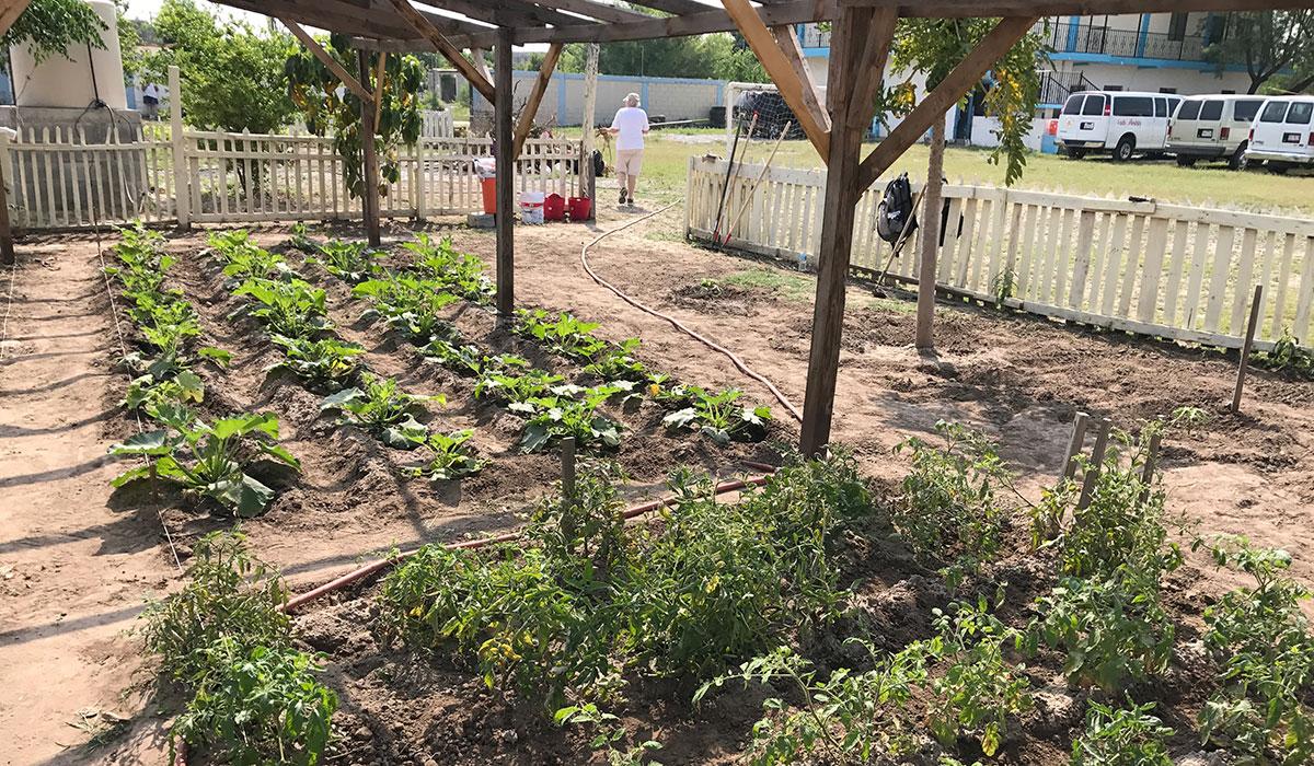The garden full of crops in Naranjito