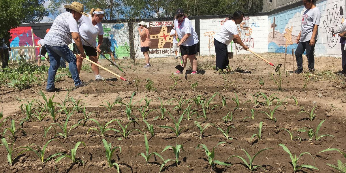 The Board of Directors working in the garden in Naranjito