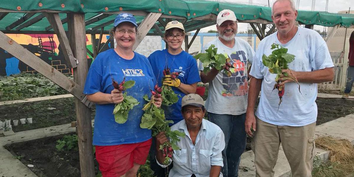 A team harvesting radishes in the garden in Naranjito