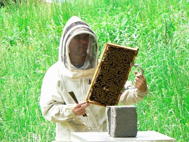 bees24