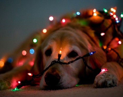 Lighted Dog for Christmas