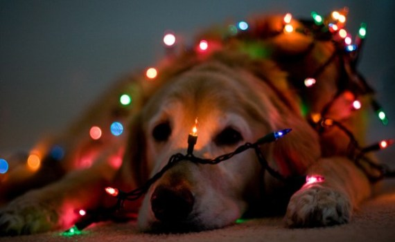 Lighted Dog for Christmas