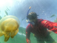 Snorkeling with Stingless Jellyfish