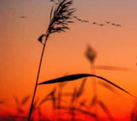 Pezzner – Saint Andre (Original Mix)
