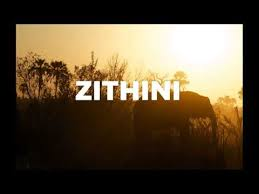 Mr Jazziq, Lady Du, Zuma & Busta 929 – Zithini (Prod. FIBBS)