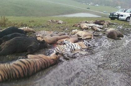 Fatal Attraction:  Zanesville, Ohio