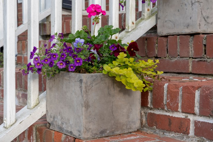 Lovely Spring Planters in Concrete Modern Box