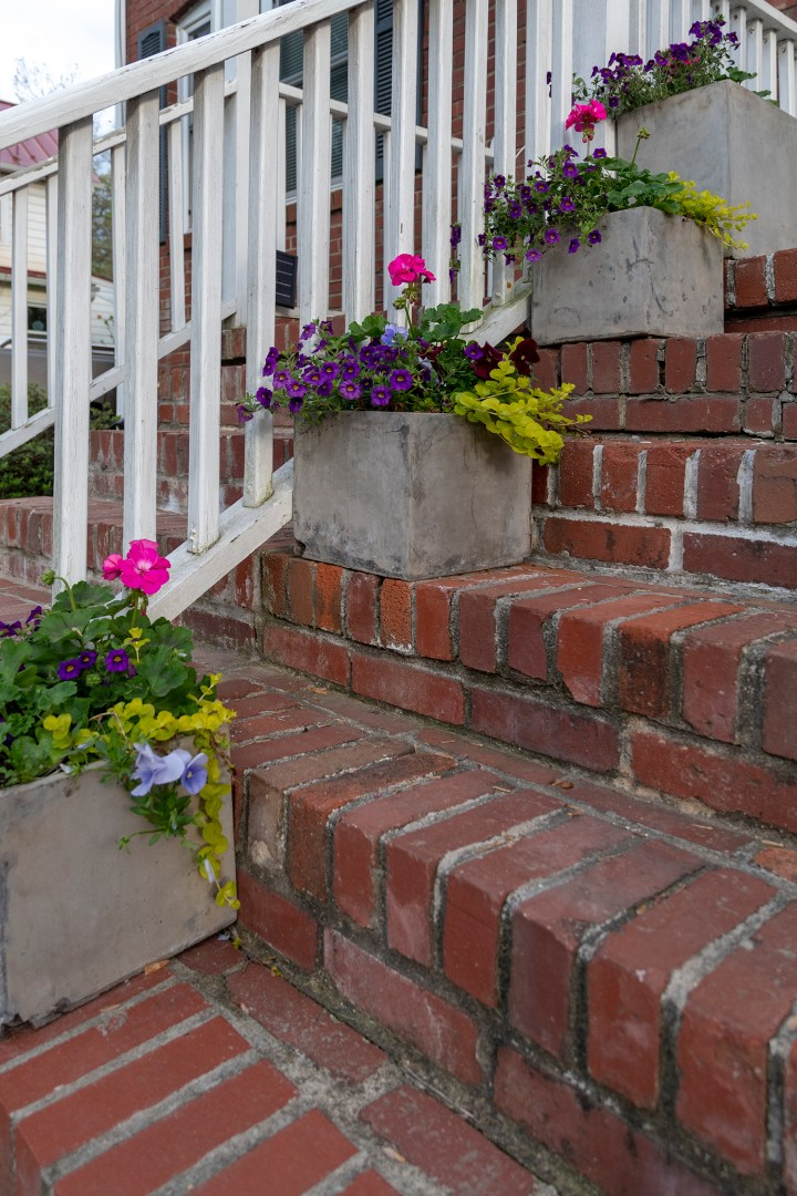 Spring planter arrangement ideas with superbells, geraniums and creeping jenny