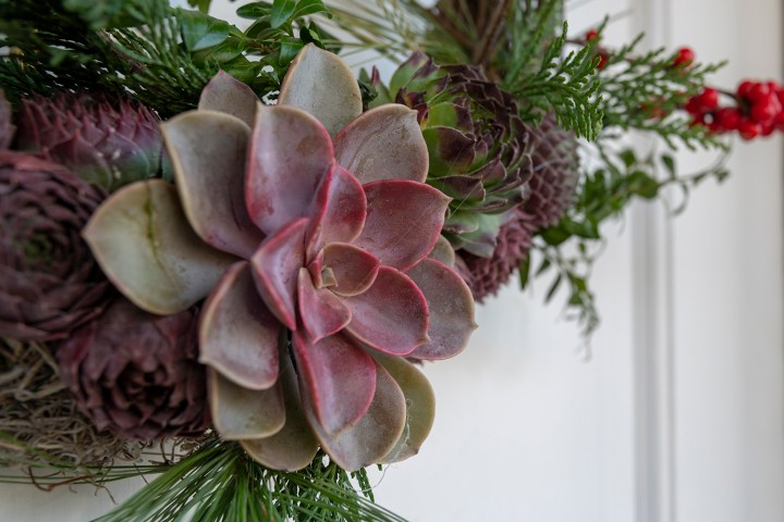 Succulent Christmas Wreath Idea