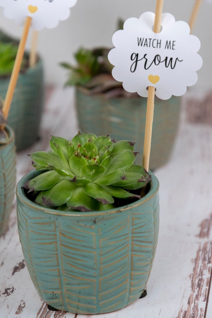 Watch Me Grow Gift Tags