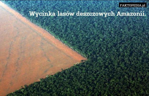 Znalezione obrazy dla zapytania wycinka lasów