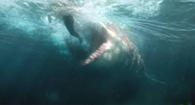 Мужчина погиб вСША после нападения акулы