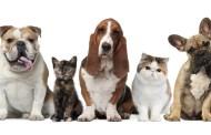Prefeitura de Ubatuba lança edital de eleição do Conselho de Bem-Estar Animal