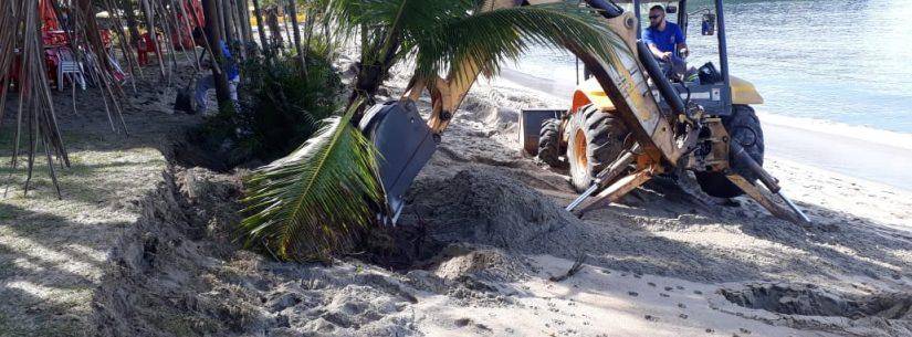 Sesep faz replantio de árvores na Praia da Mococa e outros serviços em decorrência das chuvas