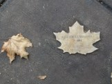 weather leaves 8 rosetta