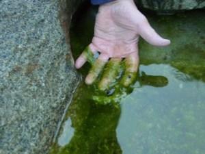Algae_Pond-400x300