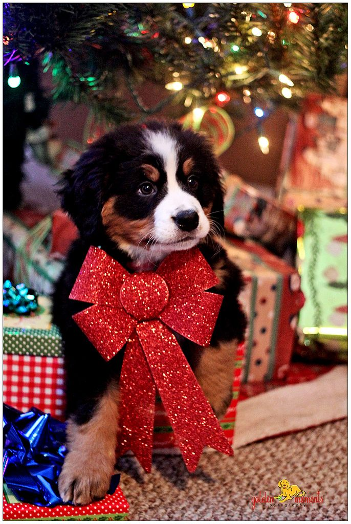 Cute Small Girl Wallpapers For Facebook 20 Well Dressed Dogs Ready For Christmas Fallinpets