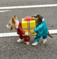 15 Unique and Creative Dog Costumes You Gonna Laugh Out ...
