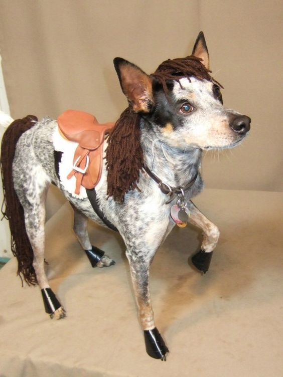 15 Unique and Creative Dog Costumes You Gonna Laugh Out