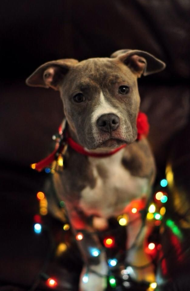 Free Wallpapers Fall Season 20 Well Dressed Dogs Ready For Christmas Fallinpets