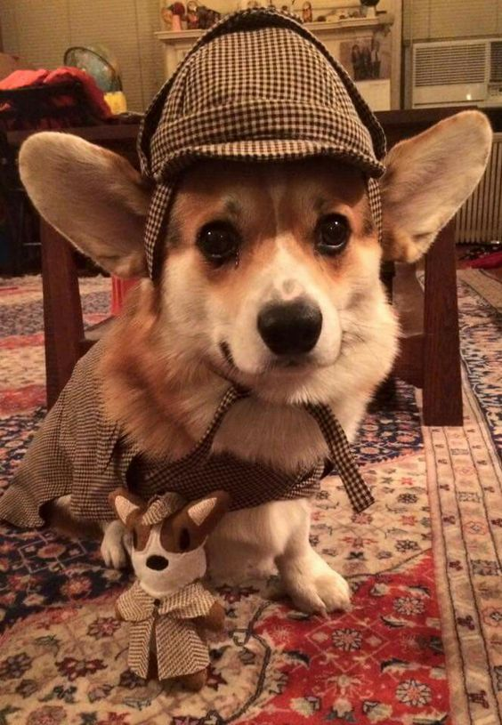Fall Harry Potter Wallpaper 20 Cute Corgi Dog Pictures You Will Love Fallinpets