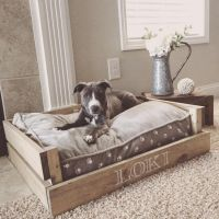dog-bed-ideas-for-your-furry-friend-8 | FallinPets